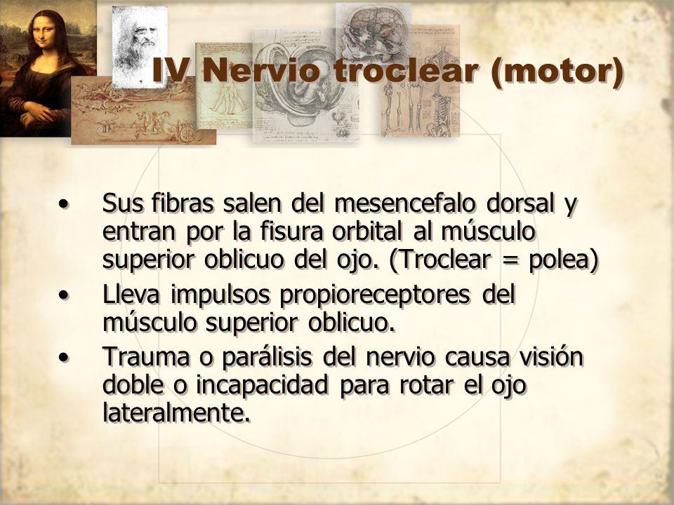 IV Nervio troclear (motor)