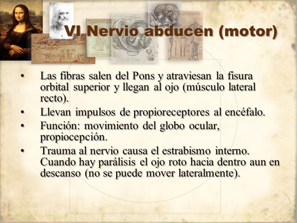 VI Nervio abducen (motor)