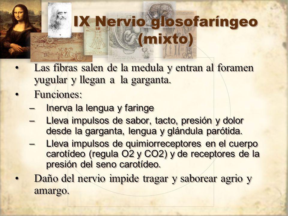 IX Nervio glosofaríngeo (mixto)