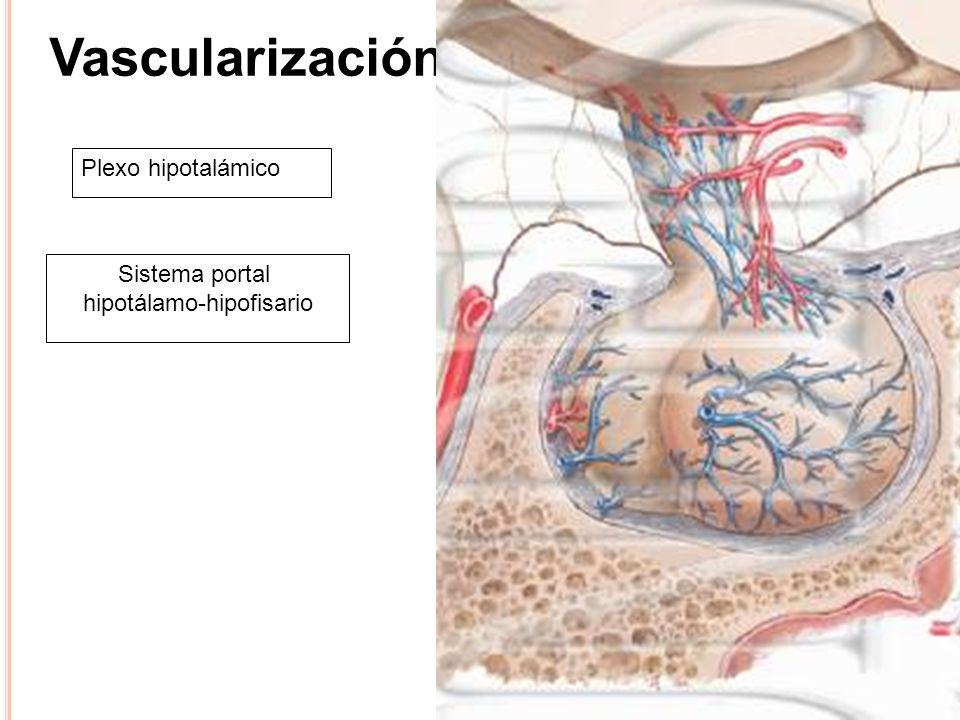 hipotálamo-hipofisario