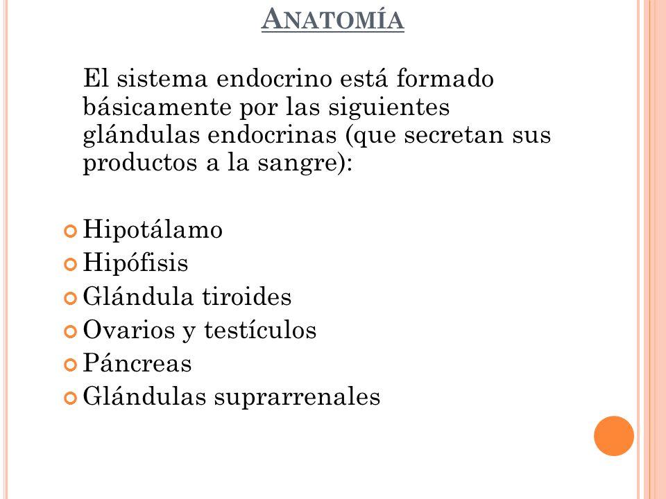 Anatomía El sistema endocrino está formado básicamente por las siguientes glándulas endocrinas (que secretan sus productos a la sangre):