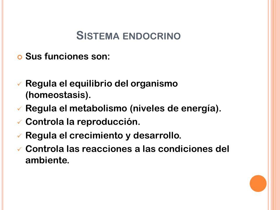 Sistema endocrino Sus funciones son: