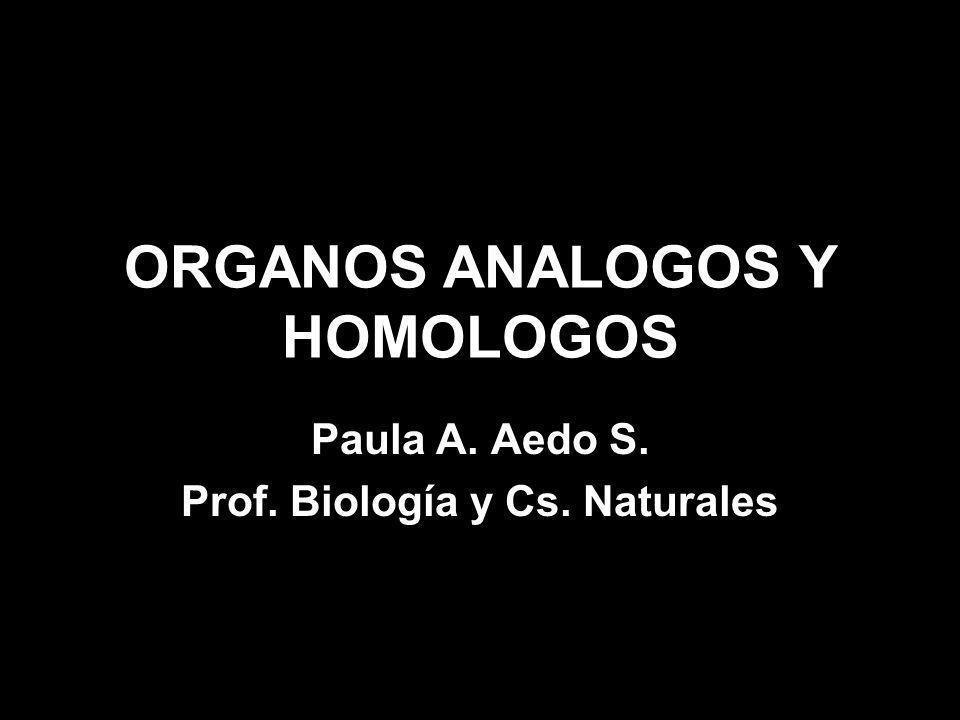 ORGANOS ANALOGOS Y HOMOLOGOS
