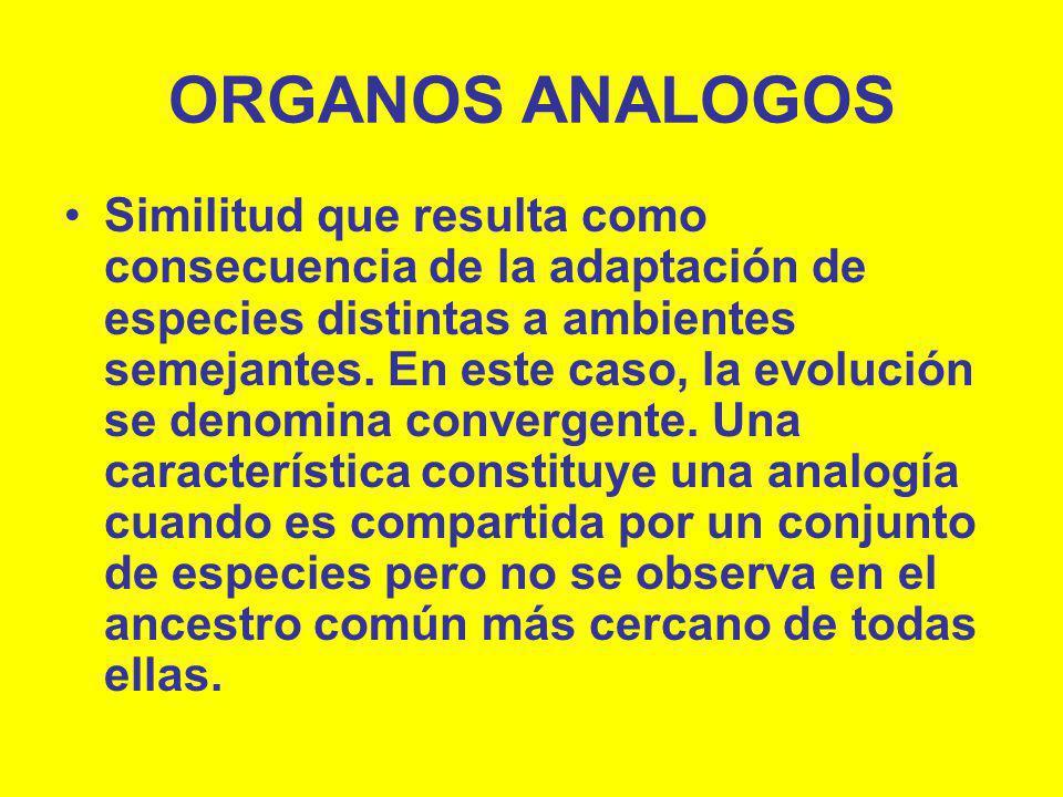 ORGANOS ANALOGOS