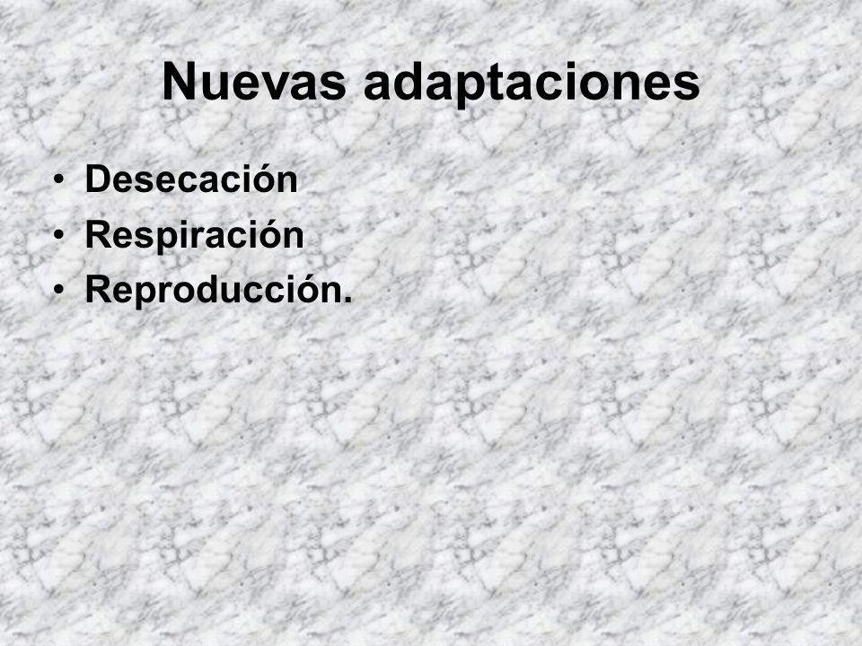 Nuevas adaptaciones Desecación Respiración Reproducción.