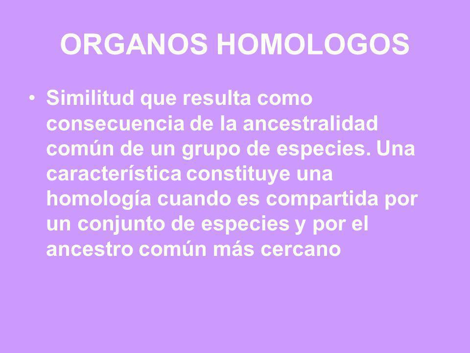 ORGANOS HOMOLOGOS