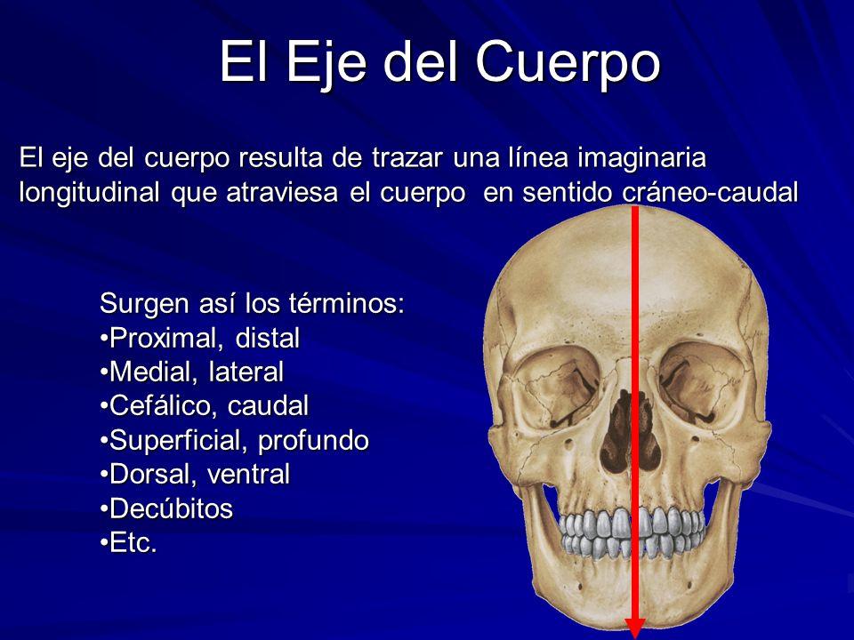 El Eje del Cuerpo El eje del cuerpo resulta de trazar una línea imaginaria longitudinal que atraviesa el cuerpo en sentido cráneo-caudal.