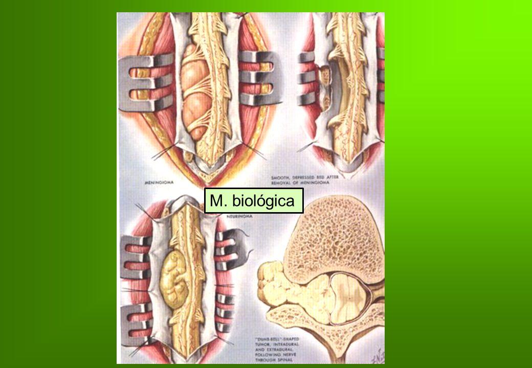 M. biológica