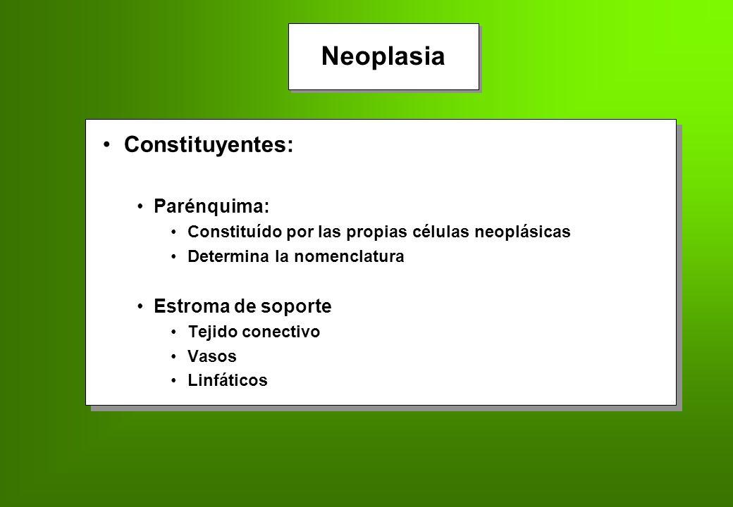 Neoplasia Constituyentes: Parénquima: Estroma de soporte