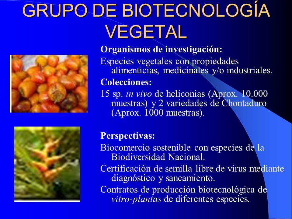 GRUPO DE BIOTECNOLOGÍA VEGETAL