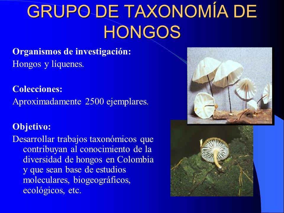 GRUPO DE TAXONOMÍA DE HONGOS