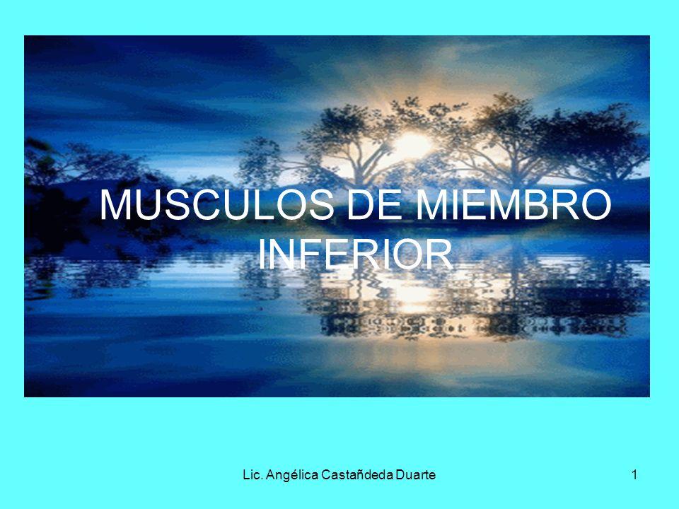 MUSCULOS DE MIEMBRO INFERIOR