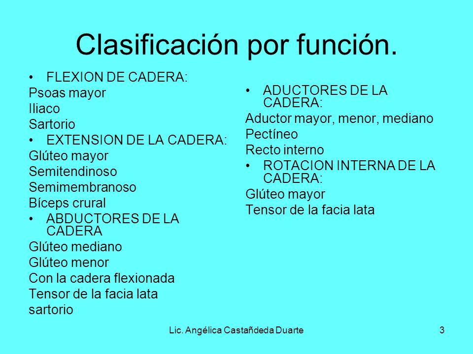 Clasificación por función.