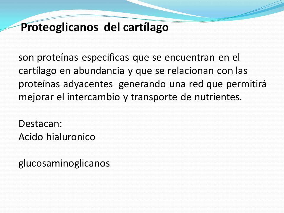 Proteoglicanos del cartílago