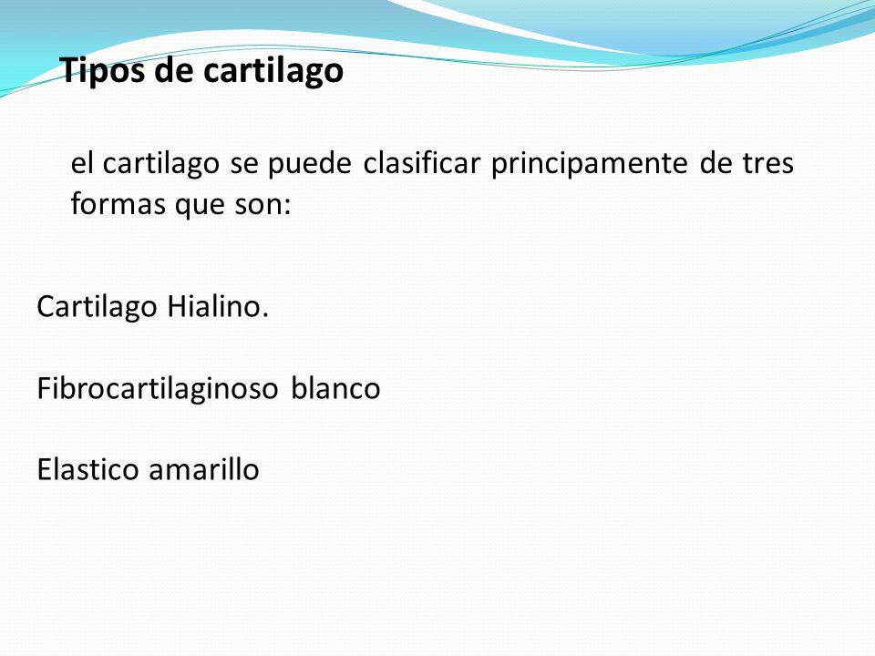 Tipos de cartilago el cartilago se puede clasificar principamente de tres formas que son: Cartilago Hialino.