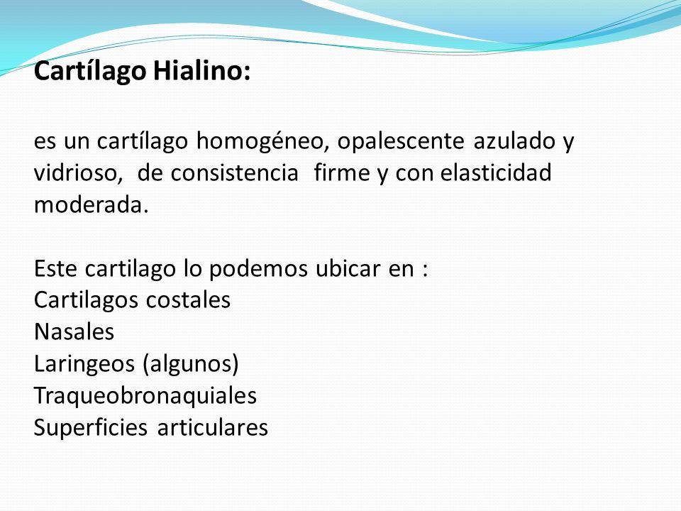 Cartílago Hialino:es un cartílago homogéneo, opalescente azulado y vidrioso, de consistencia firme y con elasticidad moderada.