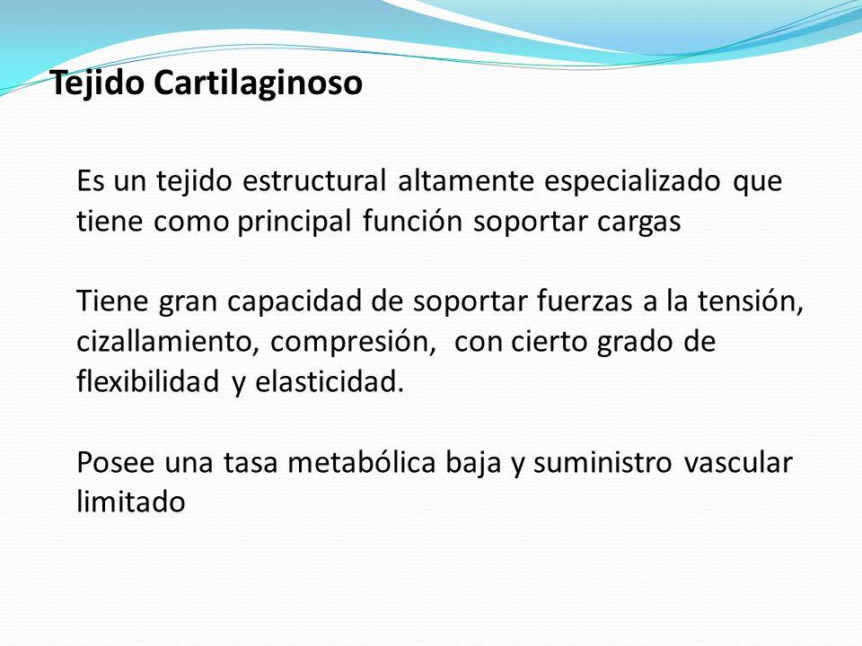 Tejido Cartilaginoso Es un tejido estructural altamente especializado que tiene como principal función soportar cargas.