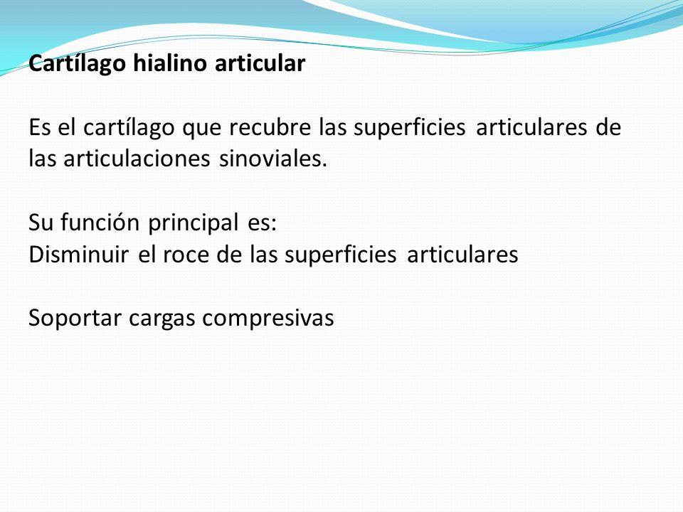 Cartílago hialino articular