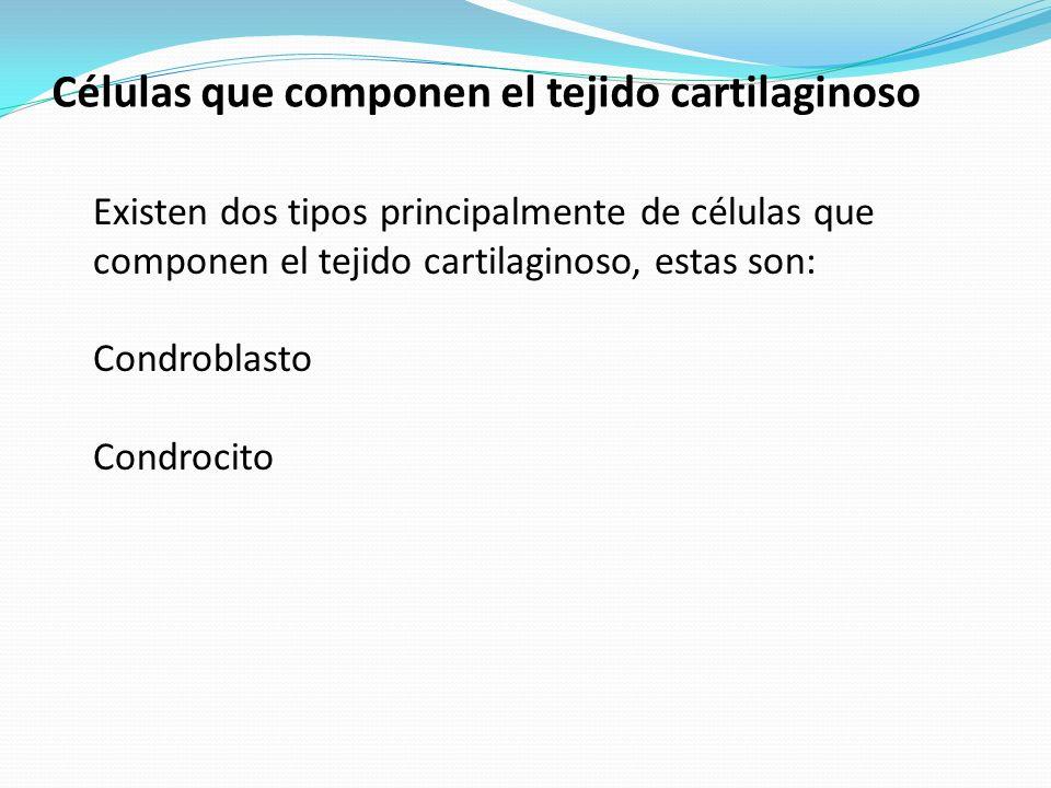 Células que componen el tejido cartilaginoso