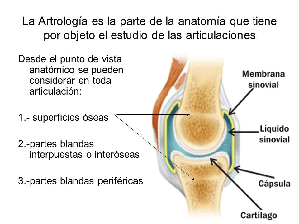 La Artrología es la parte de la anatomía que tiene por objeto el estudio de las articulaciones