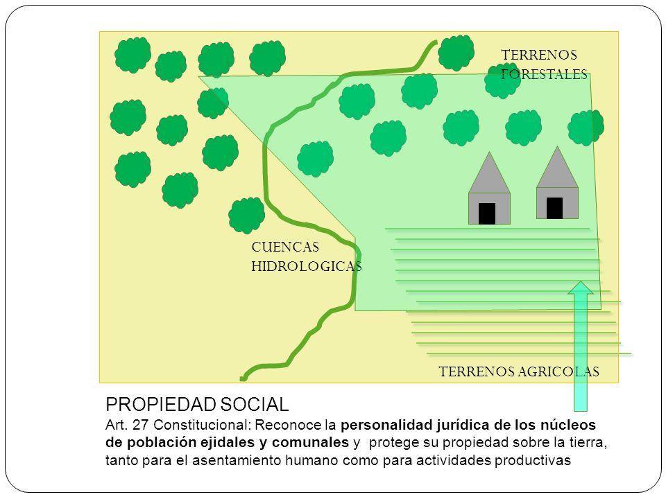 PROPIEDAD SOCIAL TERRENOS FORESTALES CUENCAS HIDROLOGICAS