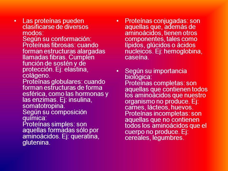 Las proteínas pueden clasificarse de diversos modos: Según su conformación: Proteínas fibrosas: cuando forman estructuras alargadas llamadas fibras. Cumplen función de sostén y de protección. Ej: elastina, colágeno. Proteínas globulares: cuando forman estructuras de forma esférica, como las hormonas y las enzimas. Ej: insulina, somatotropina. Según su composición química: Proteínas simples: son aquellas formadas sólo por aminoácidos. Ej: queratina, glutenina.
