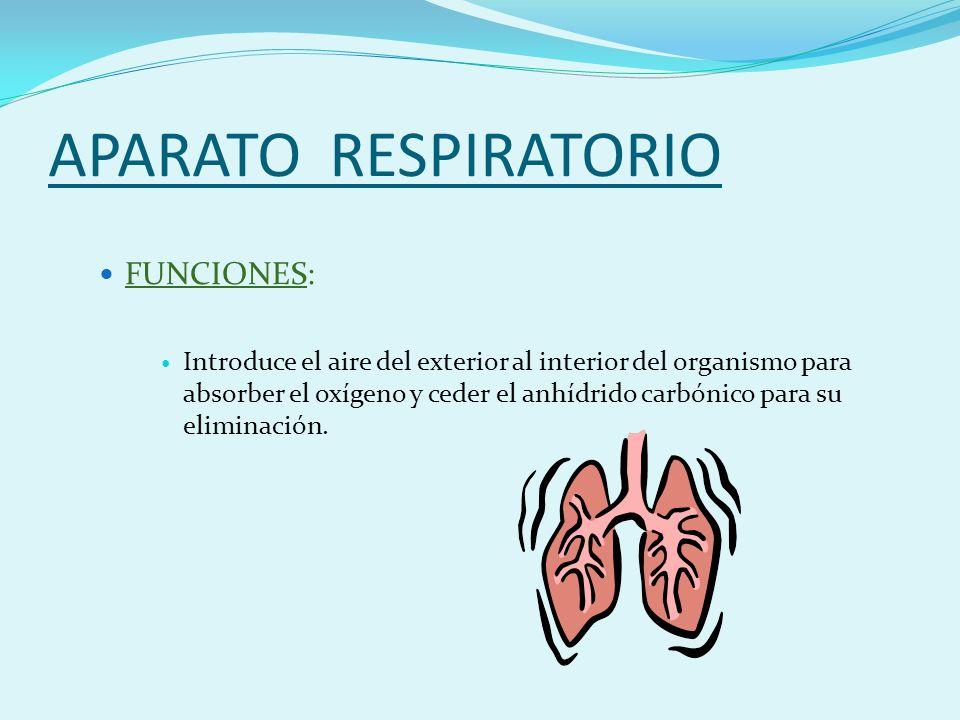 APARATO RESPIRATORIO FUNCIONES:
