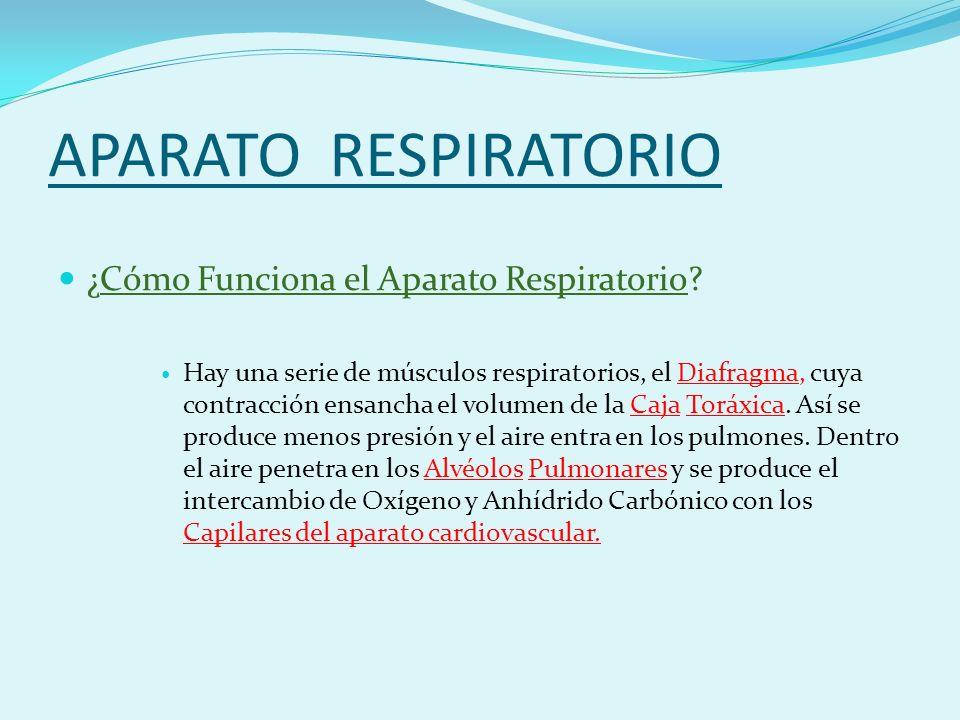 APARATO RESPIRATORIO ¿Cómo Funciona el Aparato Respiratorio