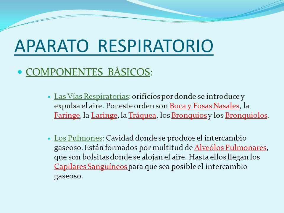 APARATO RESPIRATORIO COMPONENTES BÁSICOS: