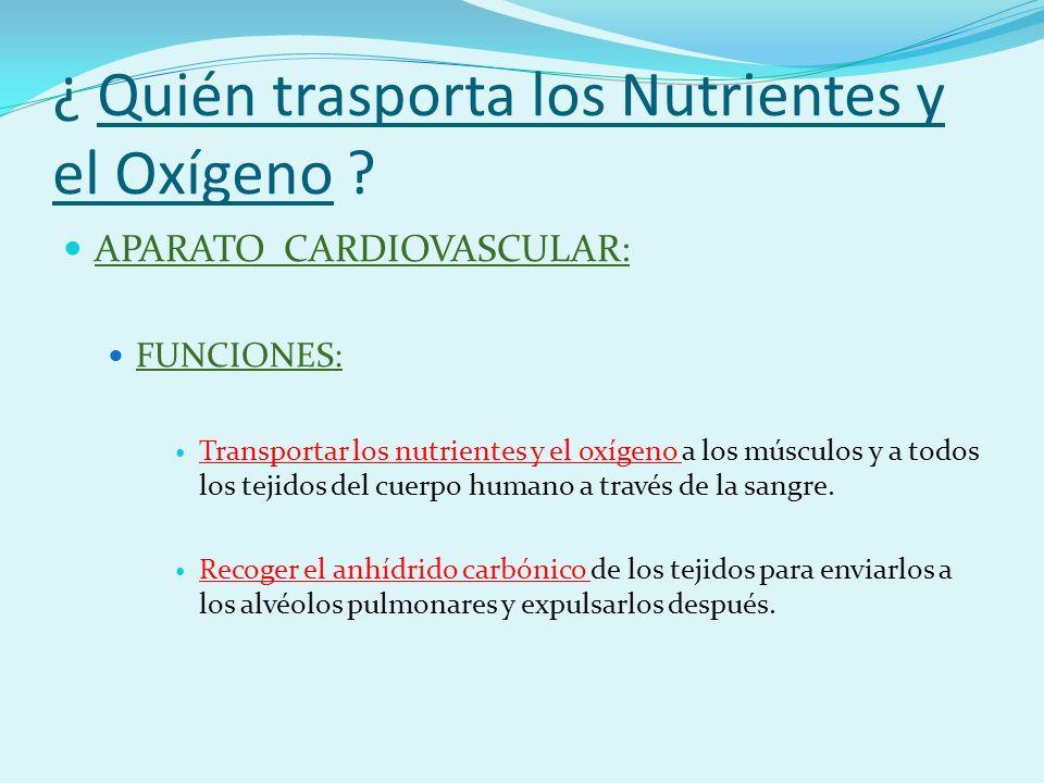 ¿ Quién trasporta los Nutrientes y el Oxígeno