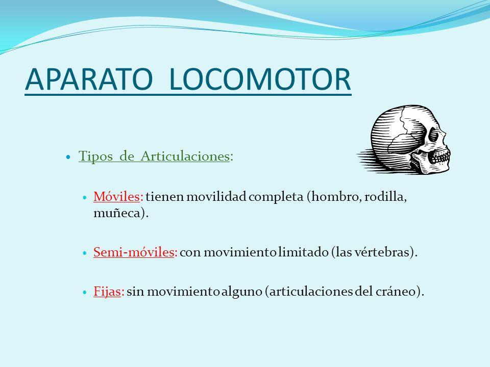 APARATO LOCOMOTOR Tipos de Articulaciones: