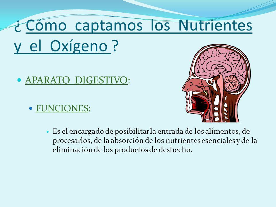 ¿ Cómo captamos los Nutrientes y el Oxígeno