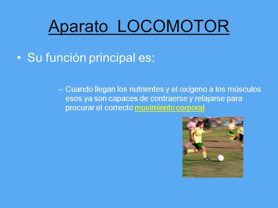 Aparato LOCOMOTOR Su función principal es: