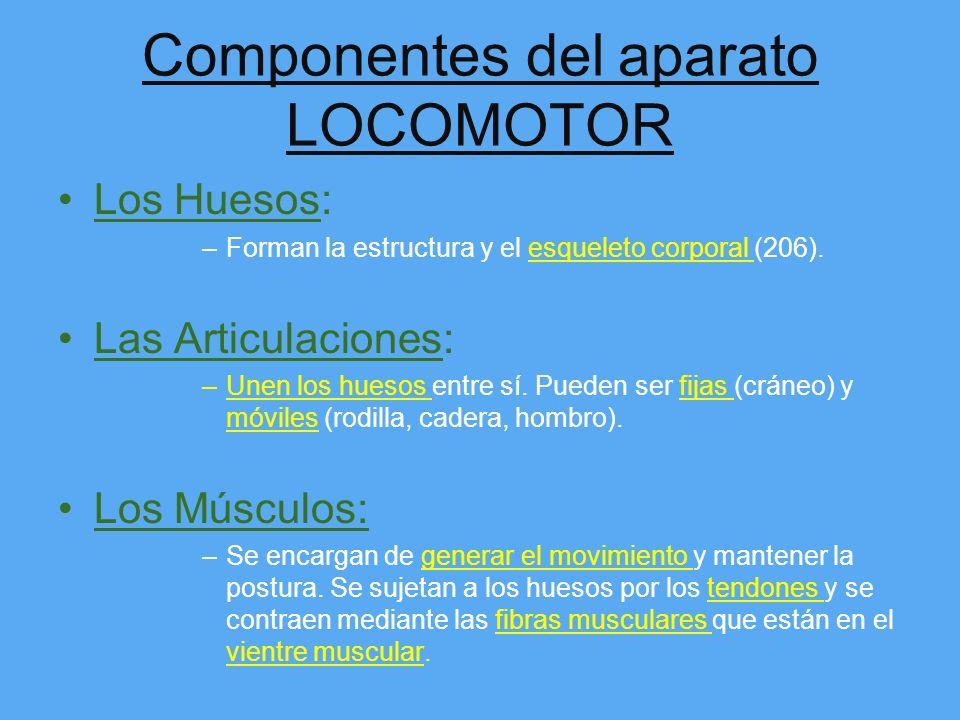 Componentes del aparato LOCOMOTOR