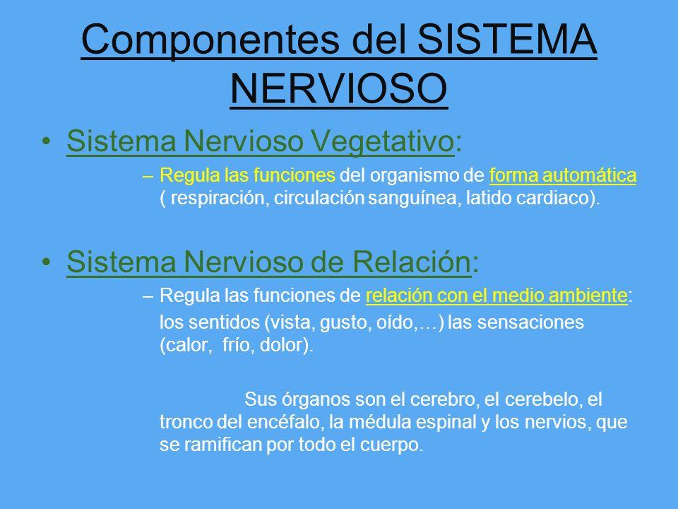 Componentes del SISTEMA NERVIOSO