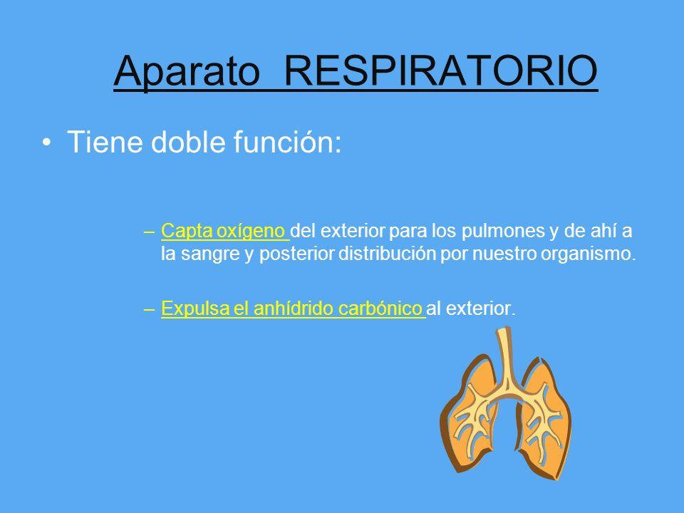 Aparato RESPIRATORIO Tiene doble función: