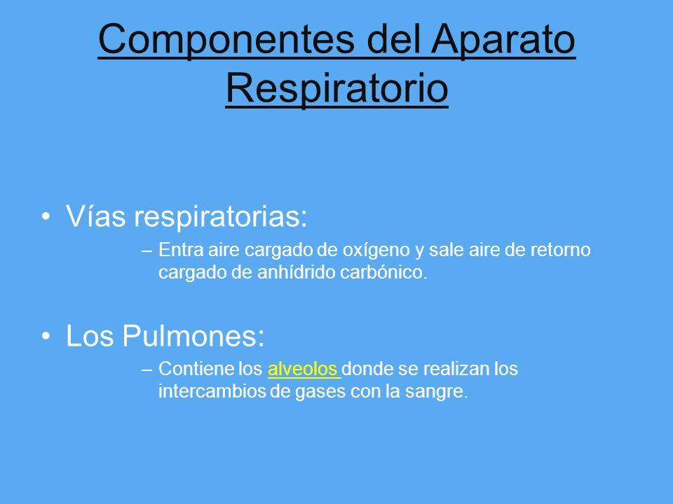 Componentes del Aparato Respiratorio