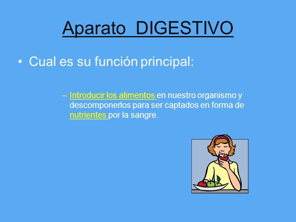 Aparato DIGESTIVO Cual es su función principal: