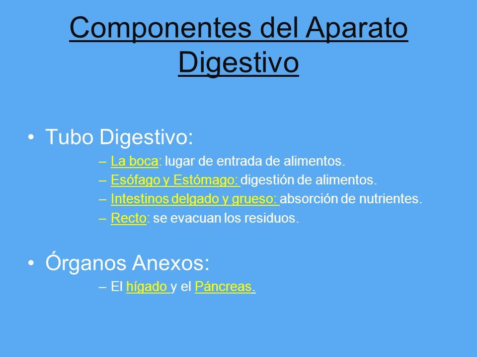 Componentes del Aparato Digestivo