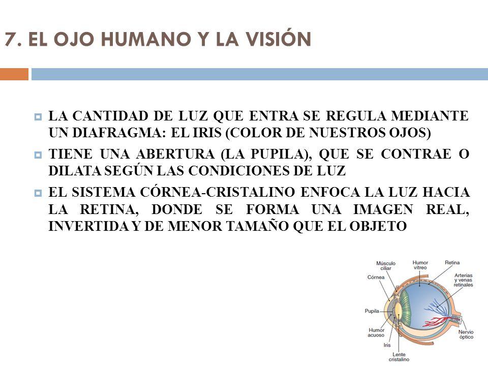 7. EL OJO HUMANO Y LA VISIÓN
