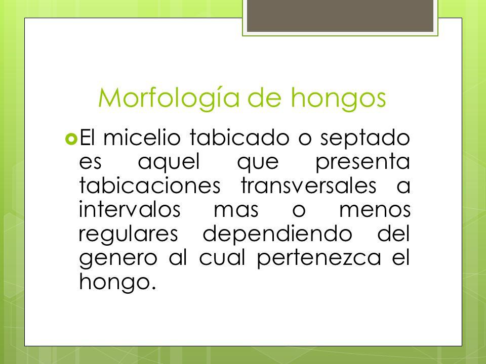 Morfología de hongos