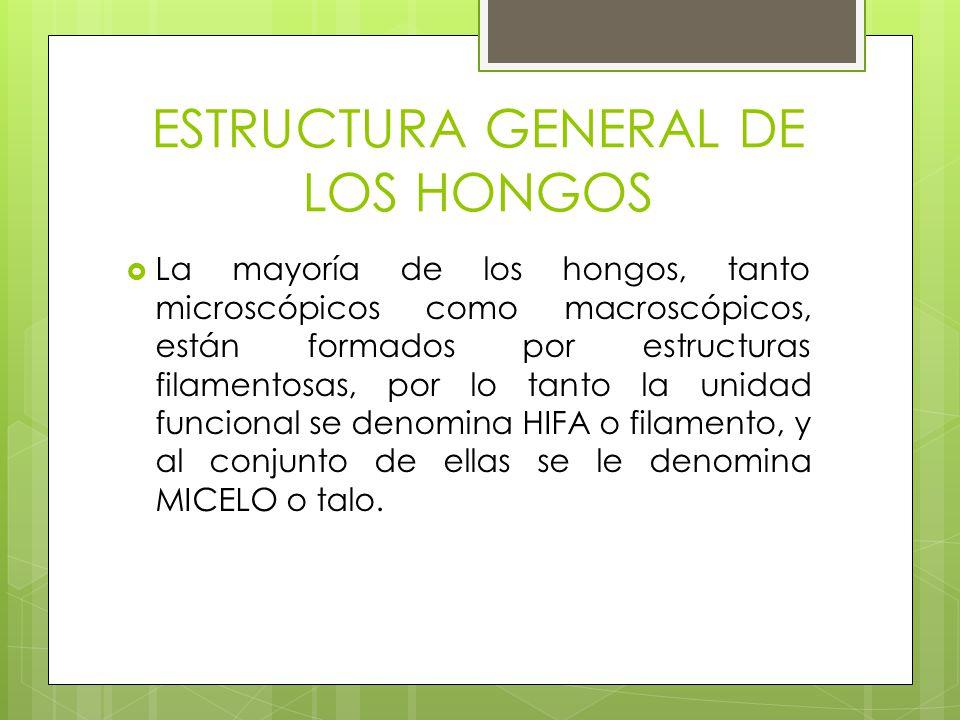 ESTRUCTURA GENERAL DE LOS HONGOS