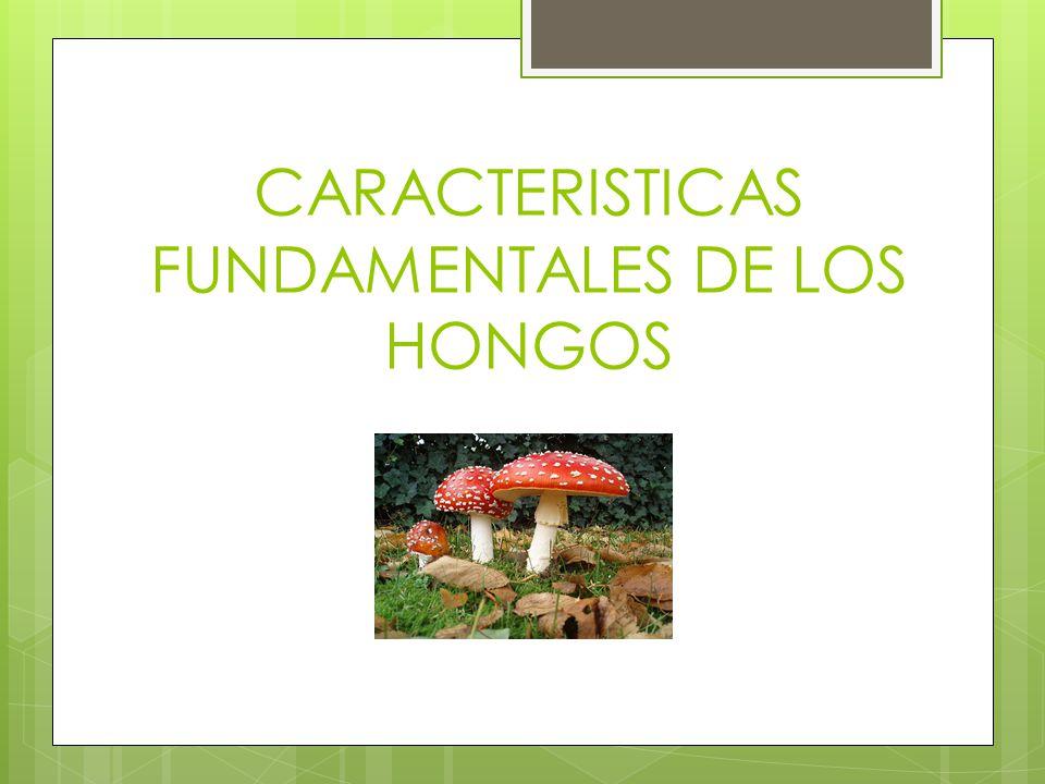 CARACTERISTICAS FUNDAMENTALES DE LOS HONGOS