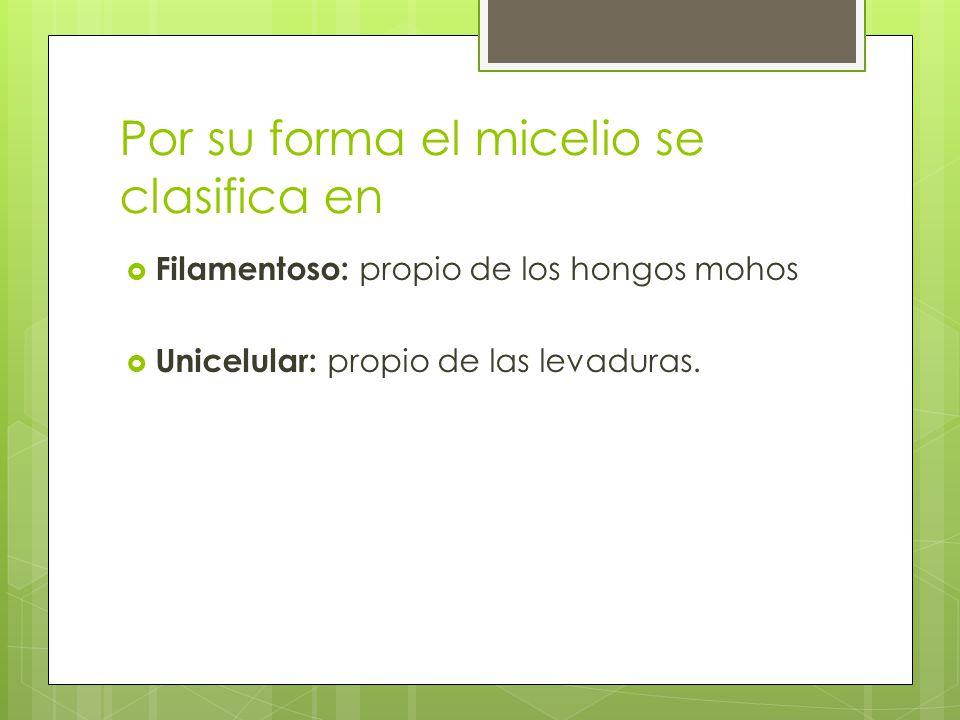 Por su forma el micelio se clasifica en