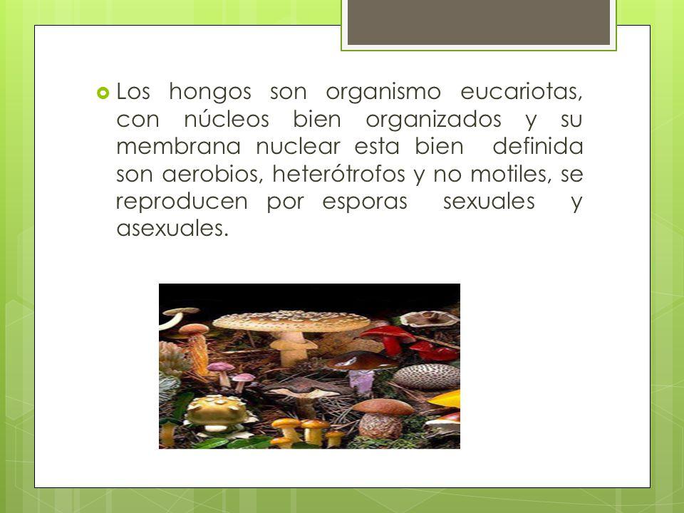 Los hongos son organismo eucariotas, con núcleos bien organizados y su membrana nuclear esta bien definida son aerobios, heterótrofos y no motiles, se reproducen por esporas sexuales y asexuales.