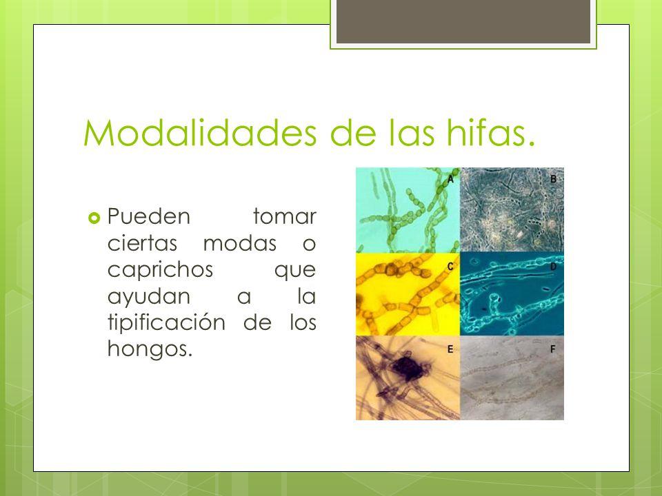 Modalidades de las hifas.