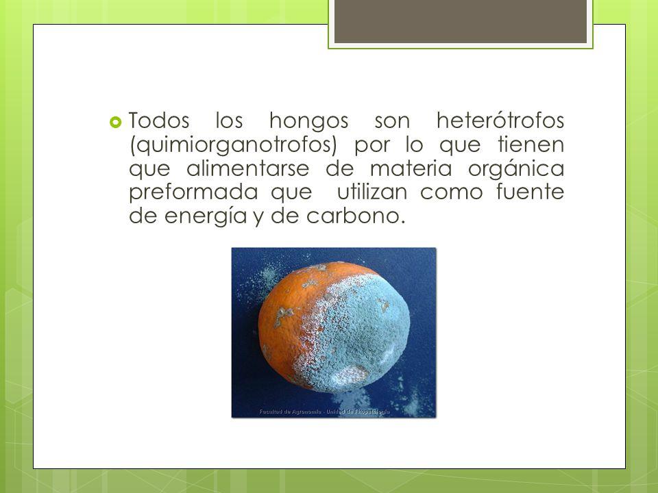 Todos los hongos son heterótrofos (quimiorganotrofos) por lo que tienen que alimentarse de materia orgánica preformada que utilizan como fuente de energía y de carbono.