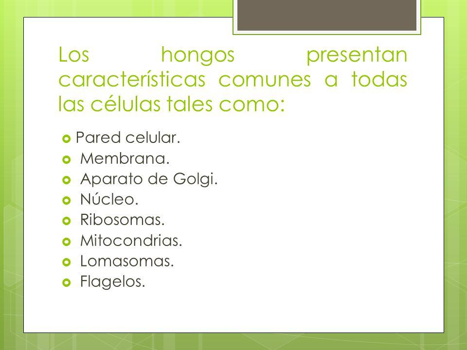 Los hongos presentan características comunes a todas las células tales como: