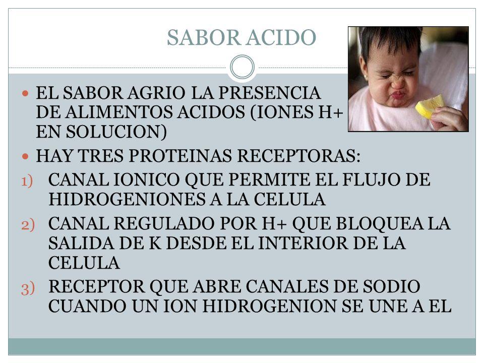 SABOR ACIDO EL SABOR AGRIO LA PRESENCIA DE ALIMENTOS ACIDOS (IONES H+ EN SOLUCION)