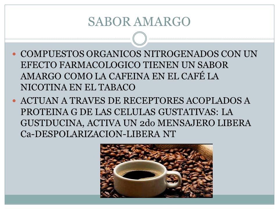SABOR AMARGO COMPUESTOS ORGANICOS NITROGENADOS CON UN EFECTO FARMACOLOGICO TIENEN UN SABOR AMARGO COMO LA CAFEINA EN EL CAFÉ LA NICOTINA EN EL TABACO.